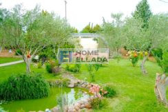 Sale - house in Attica on a plot of 5000 m²